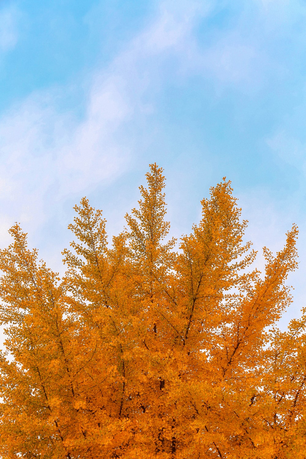 brown trees under blue sky during daytime