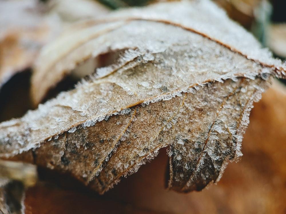 brown dried leaf in macro shot