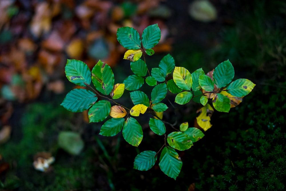 green and yellow leaves in tilt shift lens