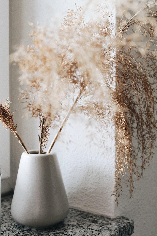 brown plant in white ceramic vase