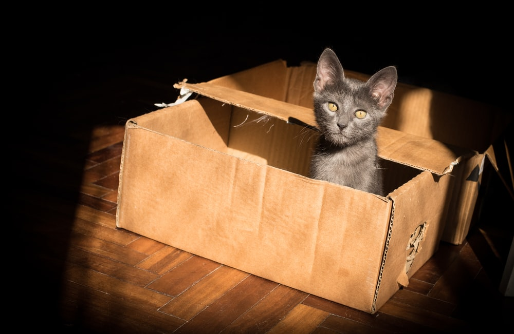 black cat in brown cardboard box