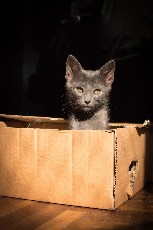 gray cat in brown cardboard box