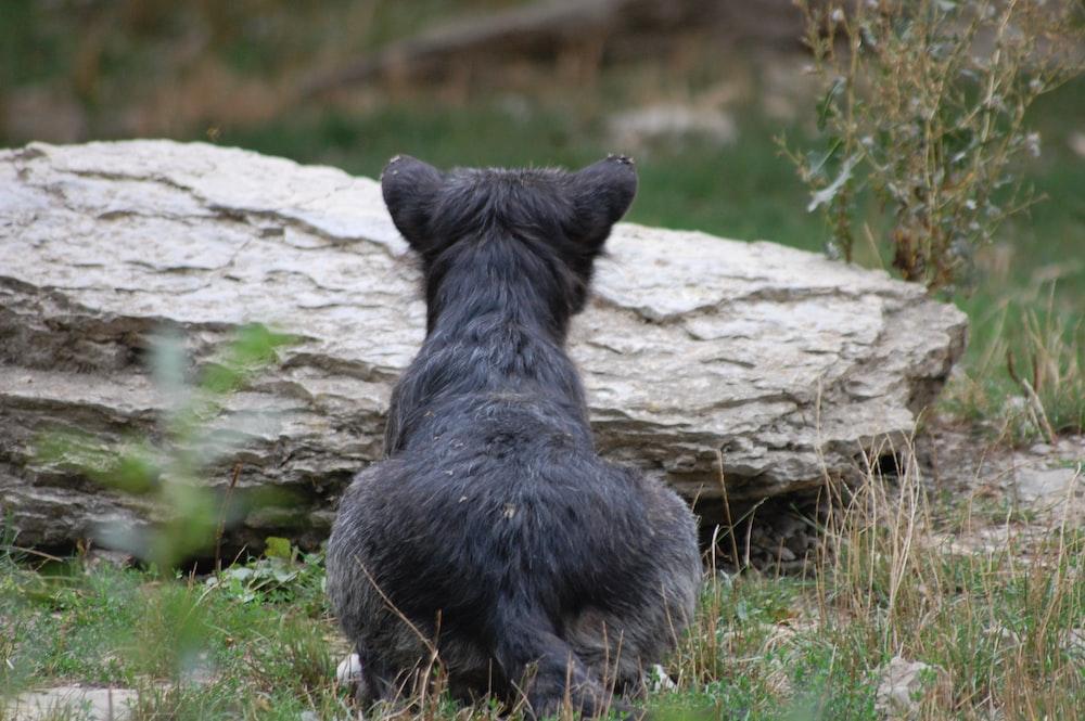 black animal on gray rock during daytime