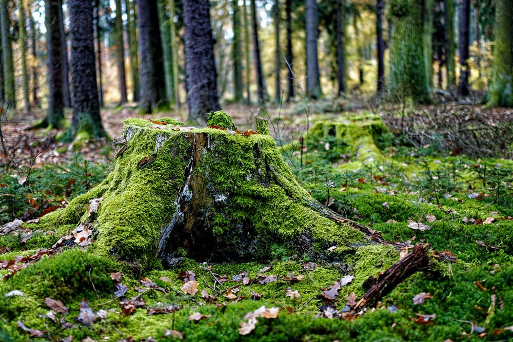 green moss on tree trunk