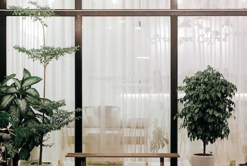 green plant beside glass window