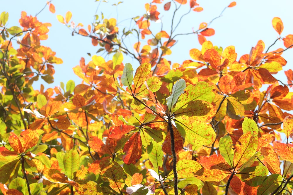 orange and yellow leaves under blue sky during daytime