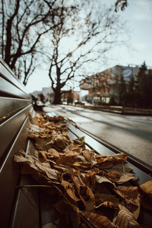 dried leaves on gray asphalt road during daytime