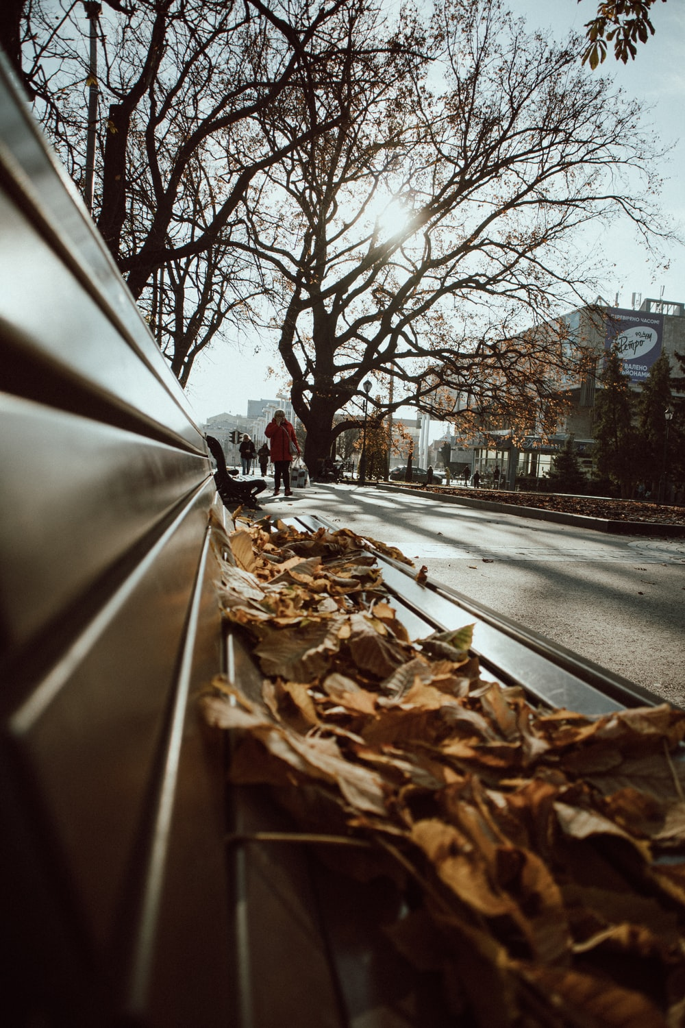 brown dried leaves on road during daytime