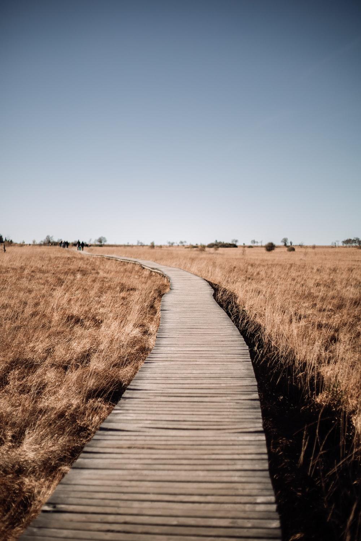 brown wooden pathway in between brown grass field during daytime