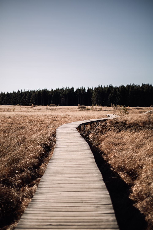 brown wooden pathway between brown grass field during daytime