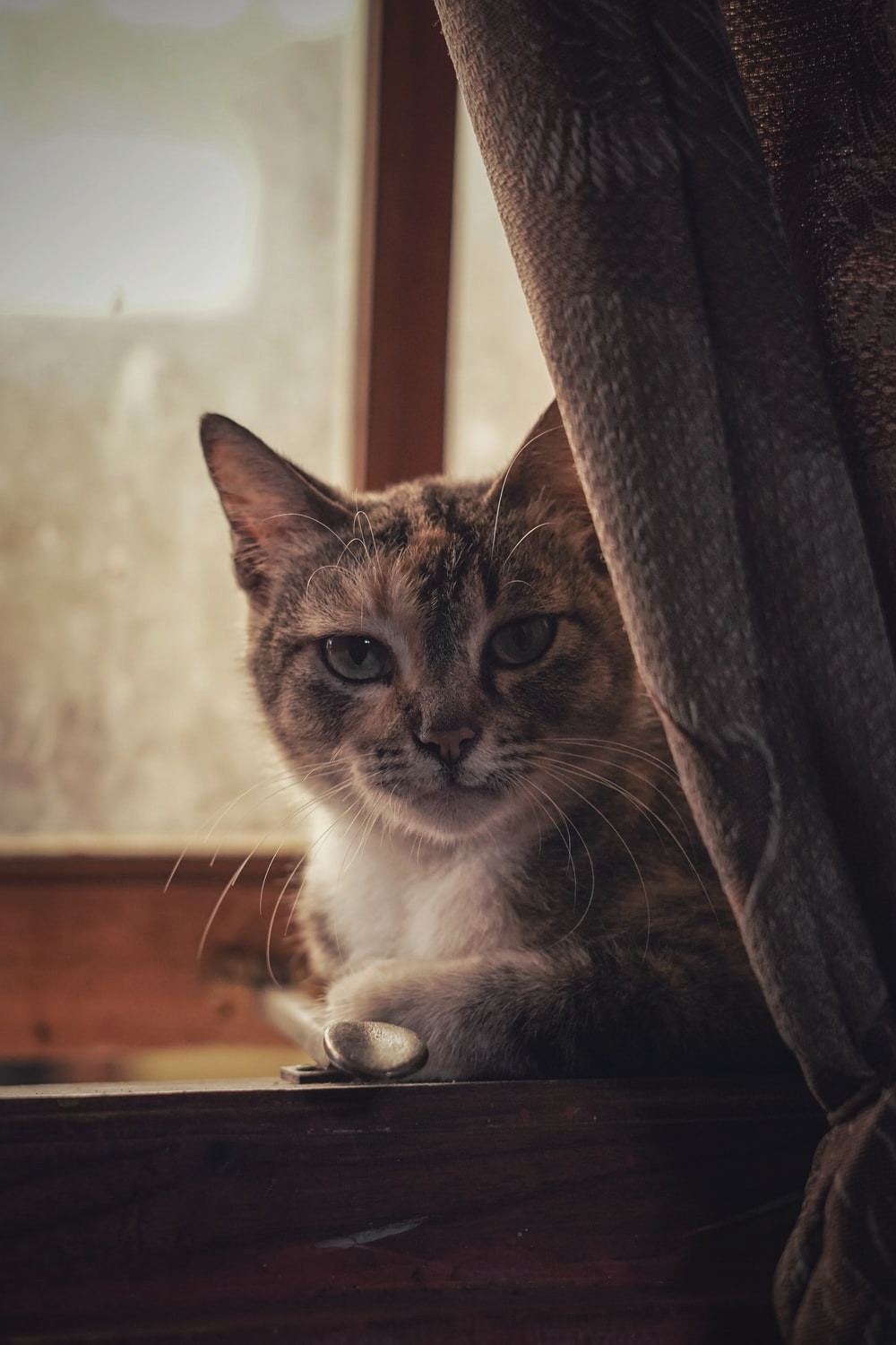 brown and white cat on brown wooden table