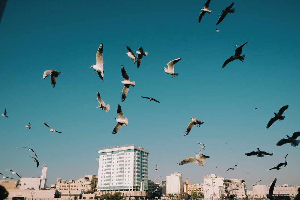 flock of birds flying over the city during daytime