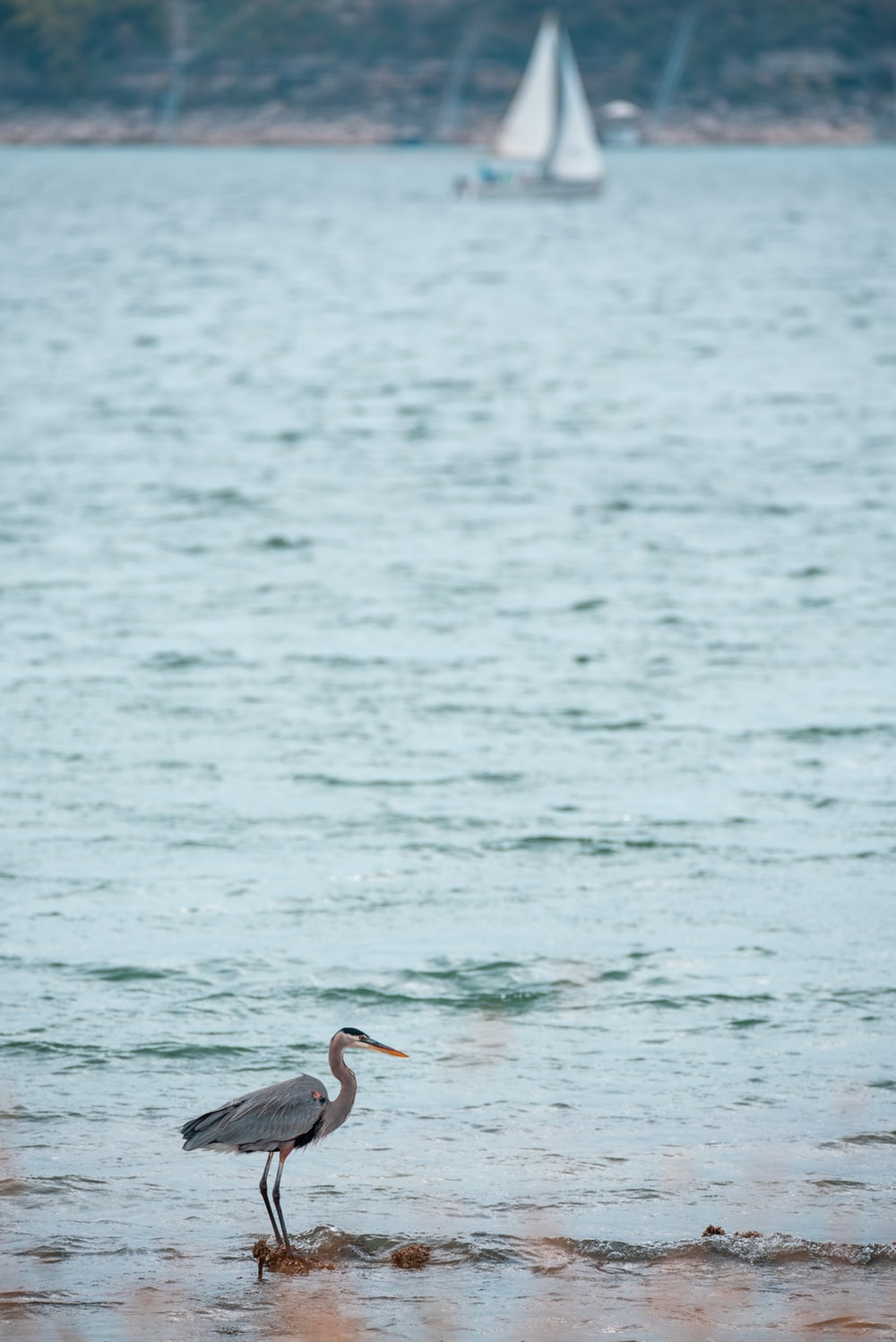 black and white pelican flying over the sea during daytime