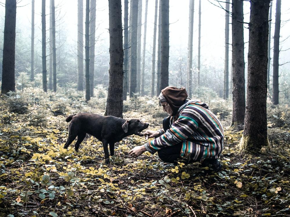 black labrador retriever puppy on dried leaves