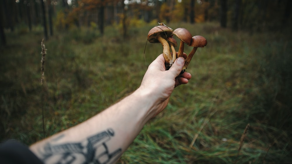 person holding brown mushroom during daytime