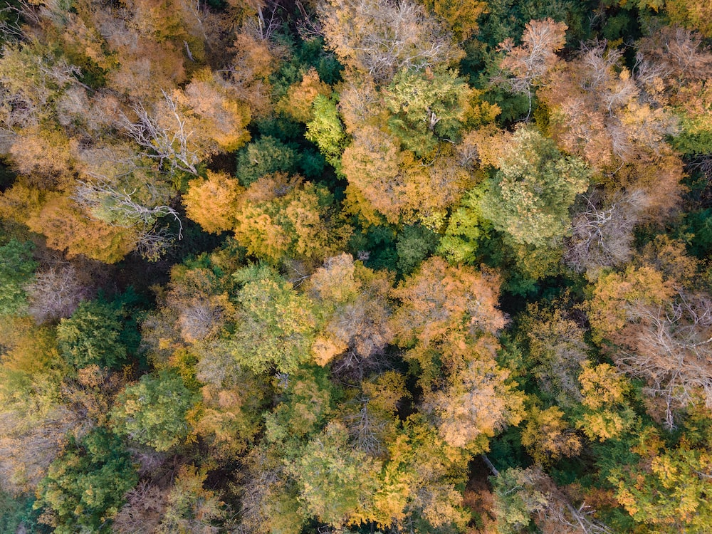 green and yellow leaf trees