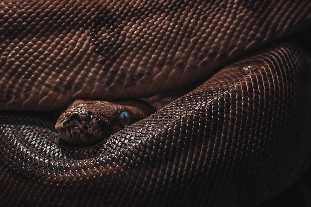 brown and black snake skin textile