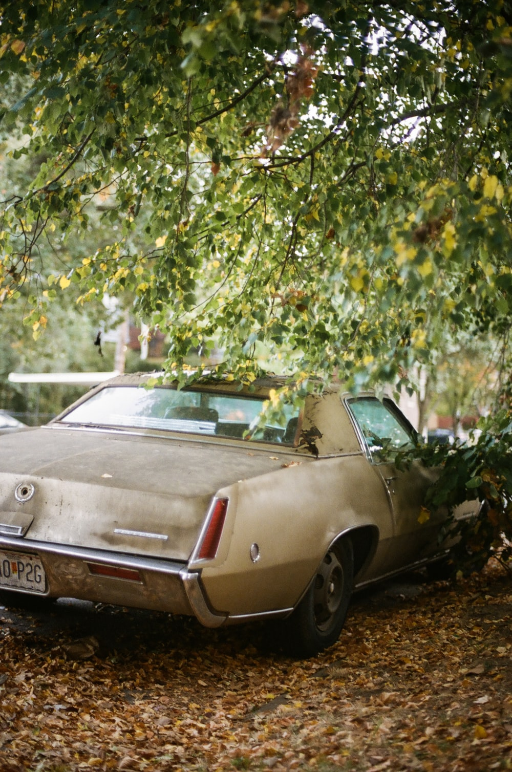 grey chevrolet camaro parked near green leaf tree during daytime