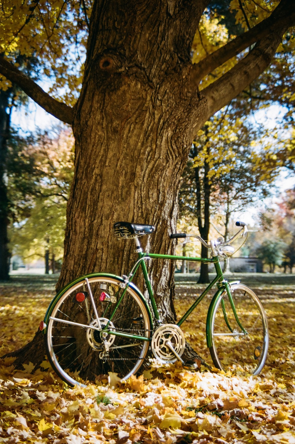 blue city bike leaning on brown tree trunk during daytime