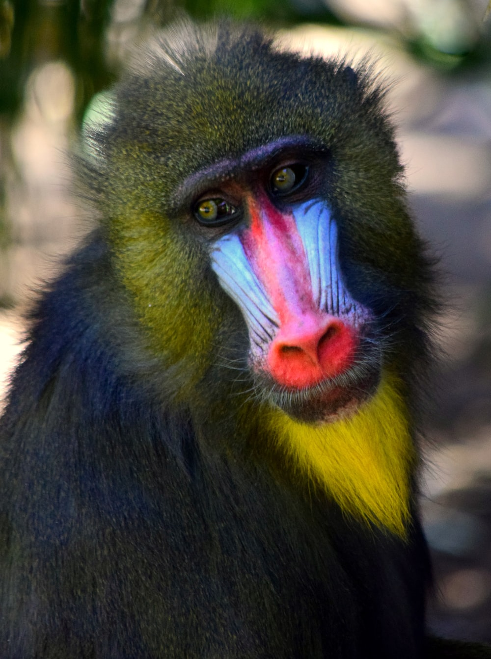 Best 500 Monkey Pictures Hd Download Free Images Stock Photos On Unsplash