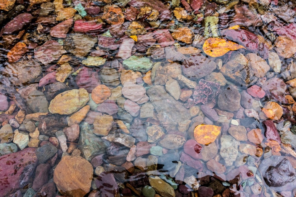 brown leaves on gray and brown rocks