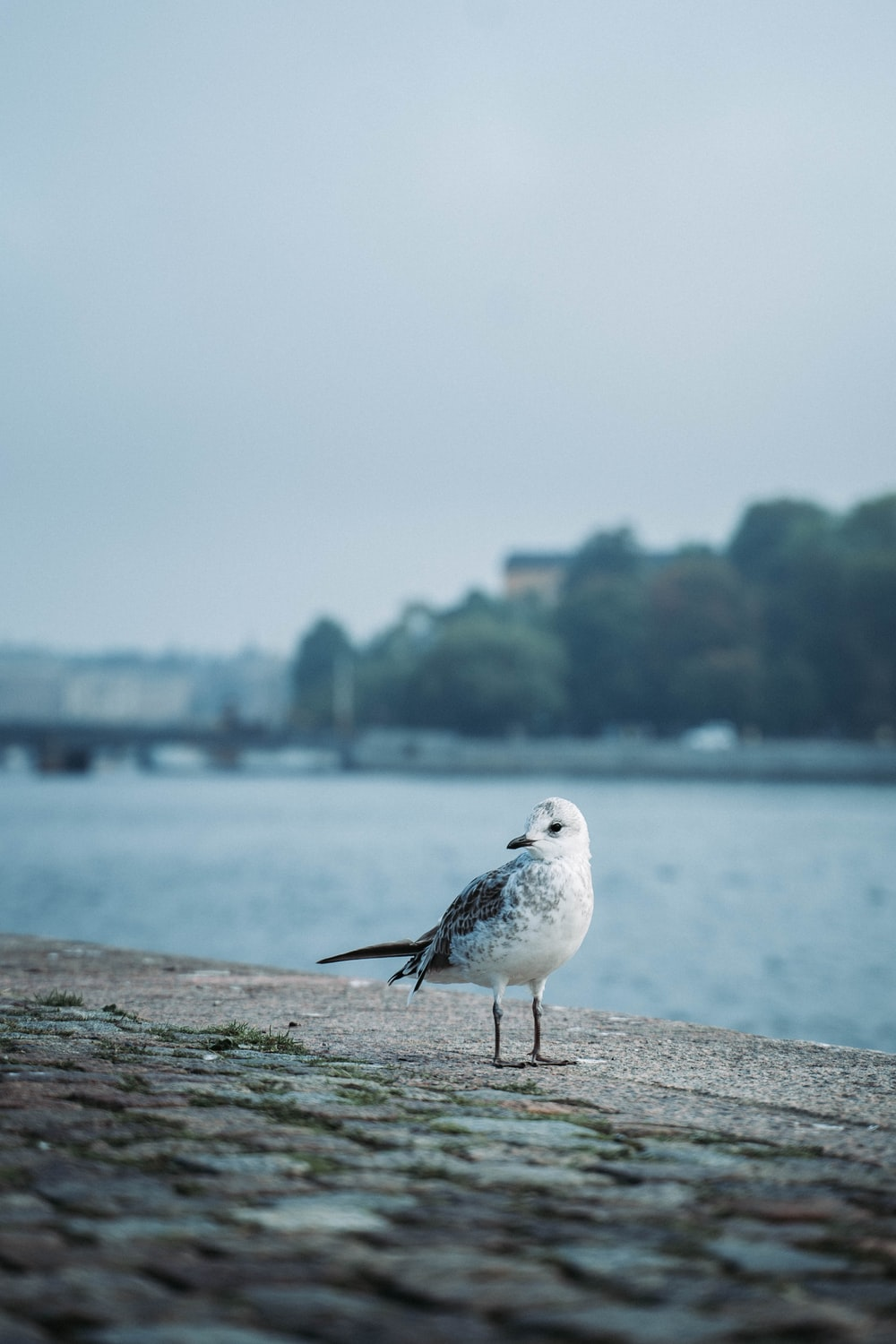 white and gray bird on gray concrete surface near body of water during daytime