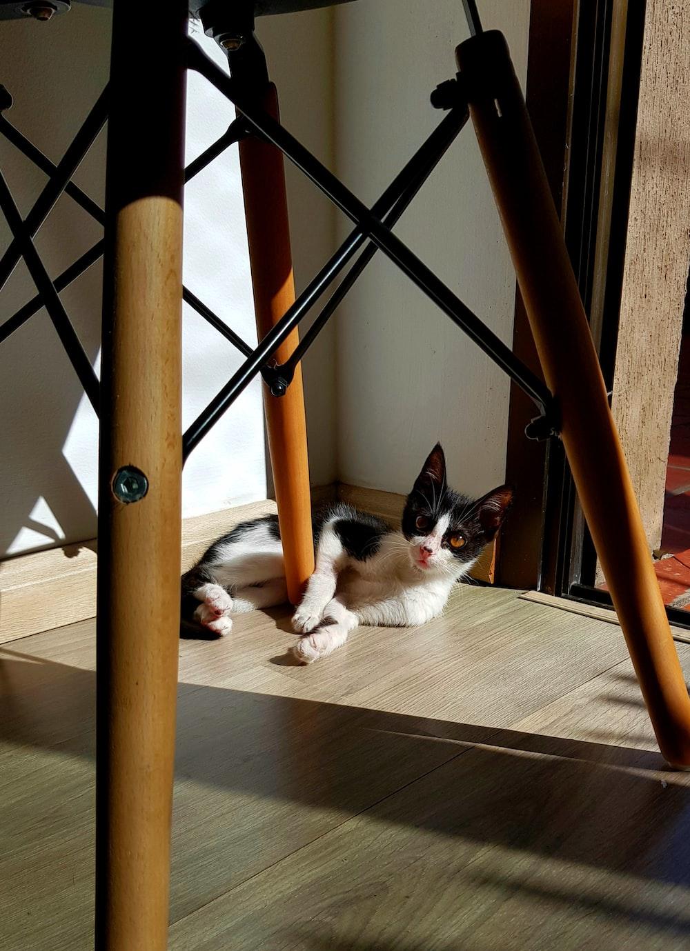 tuxedo cat lying on floor