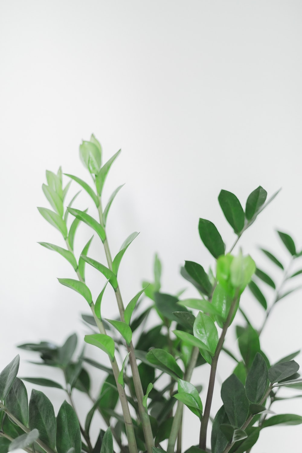 green plant in white background