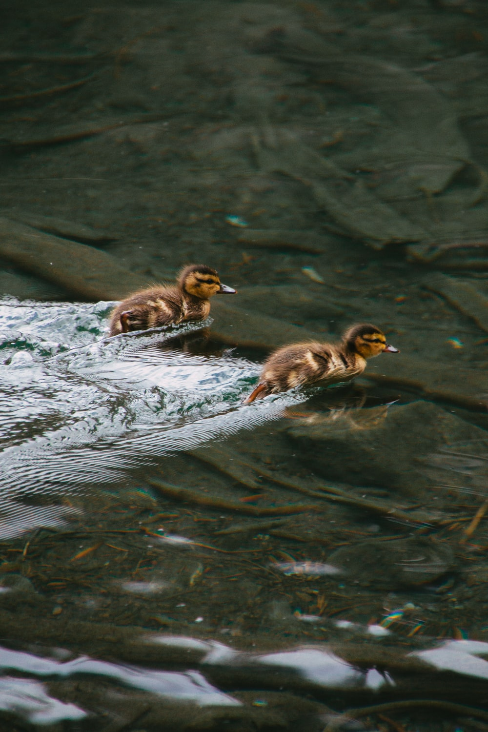 three ducklings on body of water during daytime
