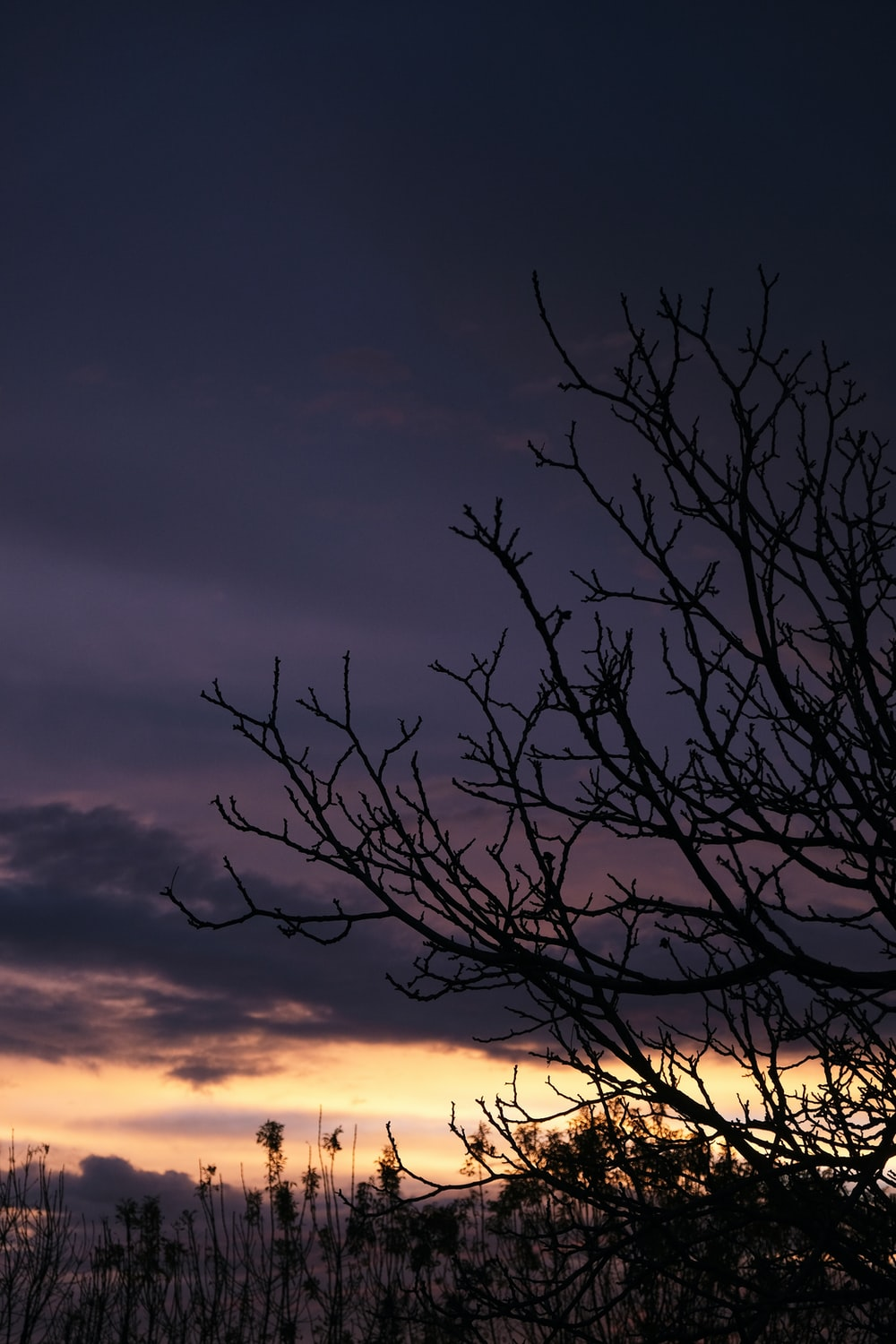 leafless tree under cloudy sky during sunset
