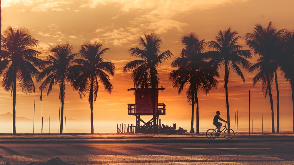 silhouette of palm trees near beach during sunset