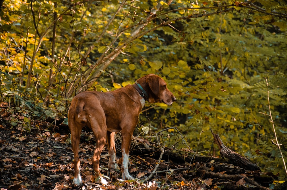 brown and white short coated dog on forest during daytime