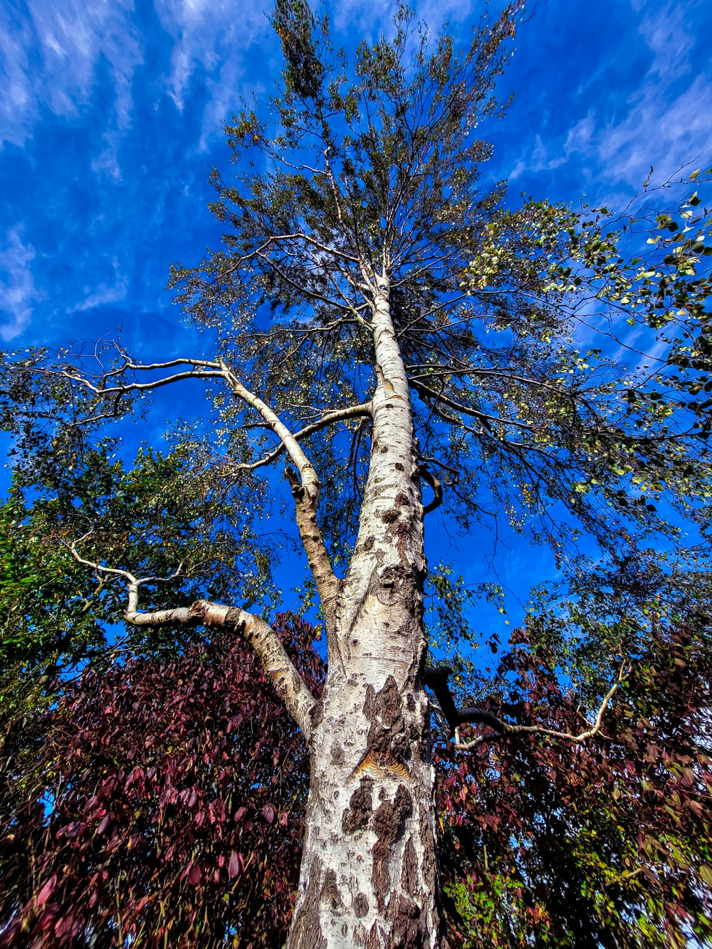 brown and green tree under blue sky during daytime