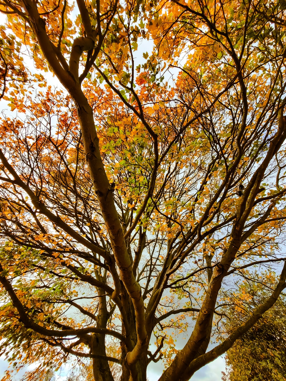 brown tree with yellow leaves during daytime