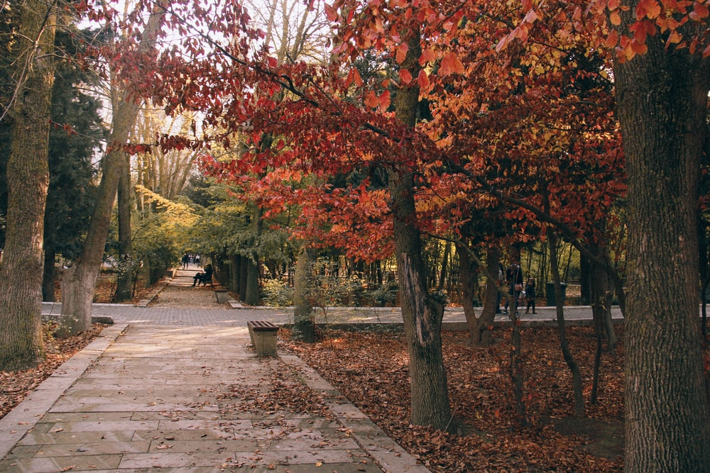 red and brown trees on sidewalk during daytime