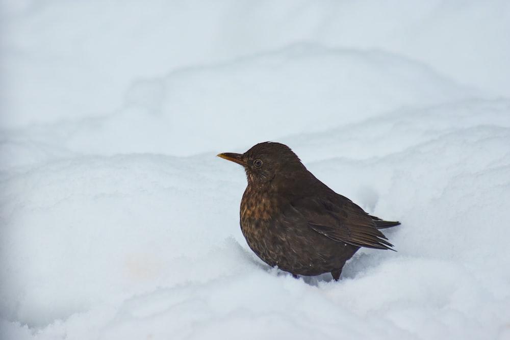 black bird on snow covered ground during daytime