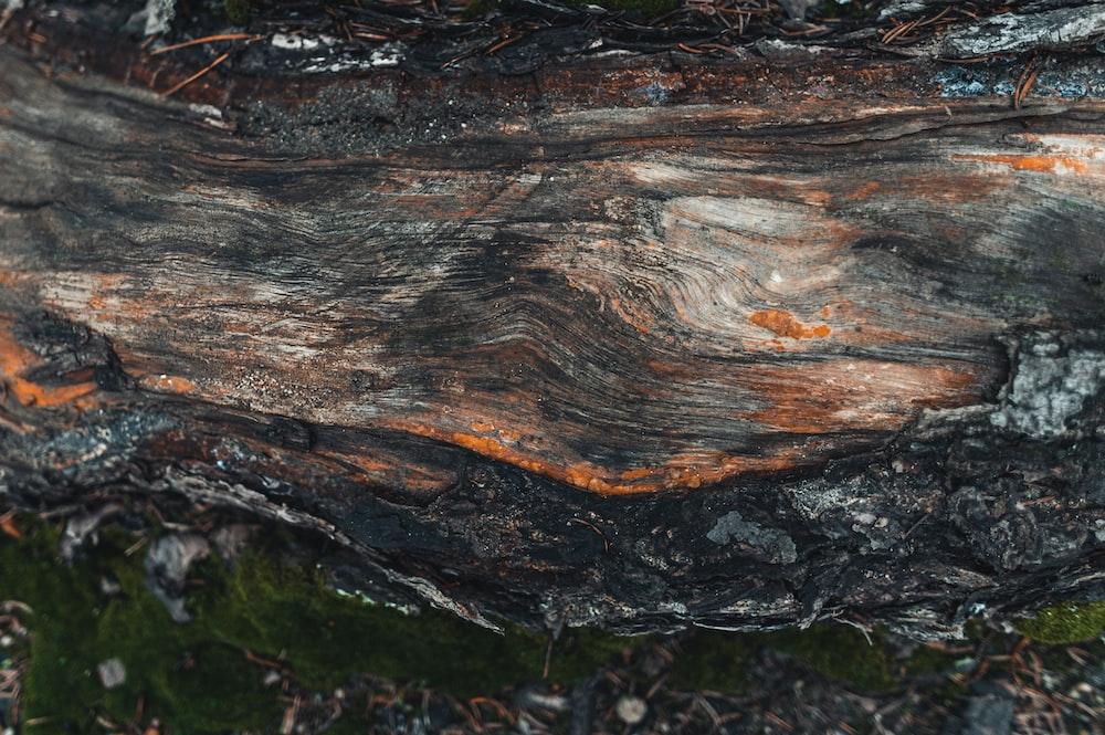 brown tree log on green grass