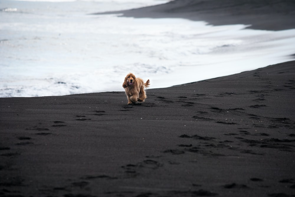 brown long coated dog on gray sand during daytime