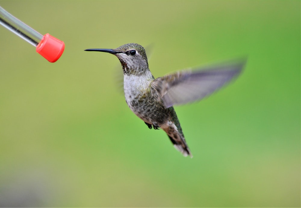 brown and white humming bird flying during daytime