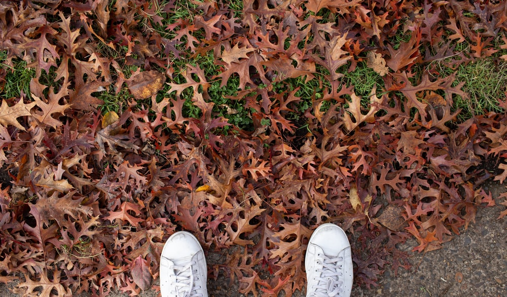 person wearing white sneakers standing on dried leaves
