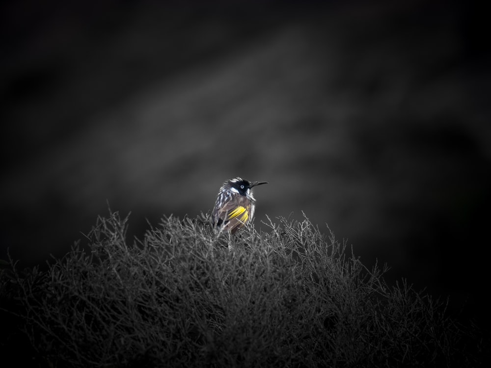 yellow and black bird on brown grass