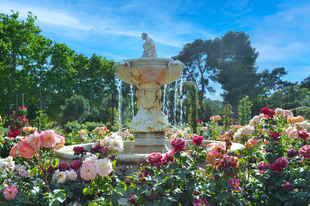 pink flowers near fountain under blue sky during daytime