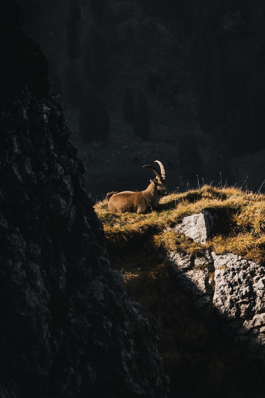 brown animal on rocky mountain during daytime