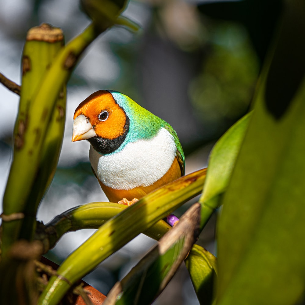 green yellow and white bird on tree branch