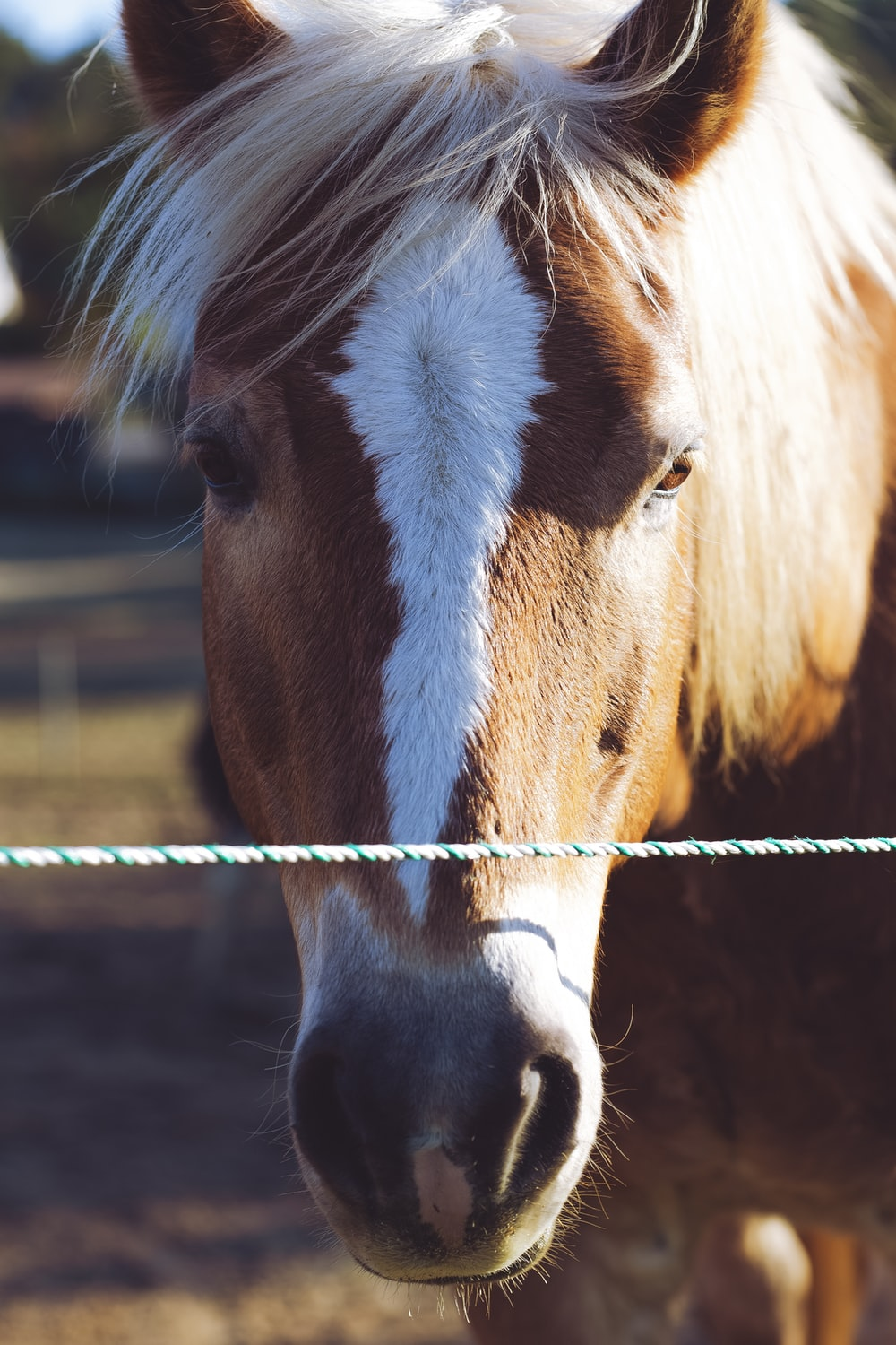 brown and white horse in cage