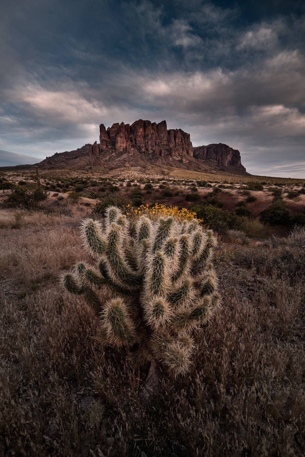 green cactus on brown field under cloudy sky during daytime