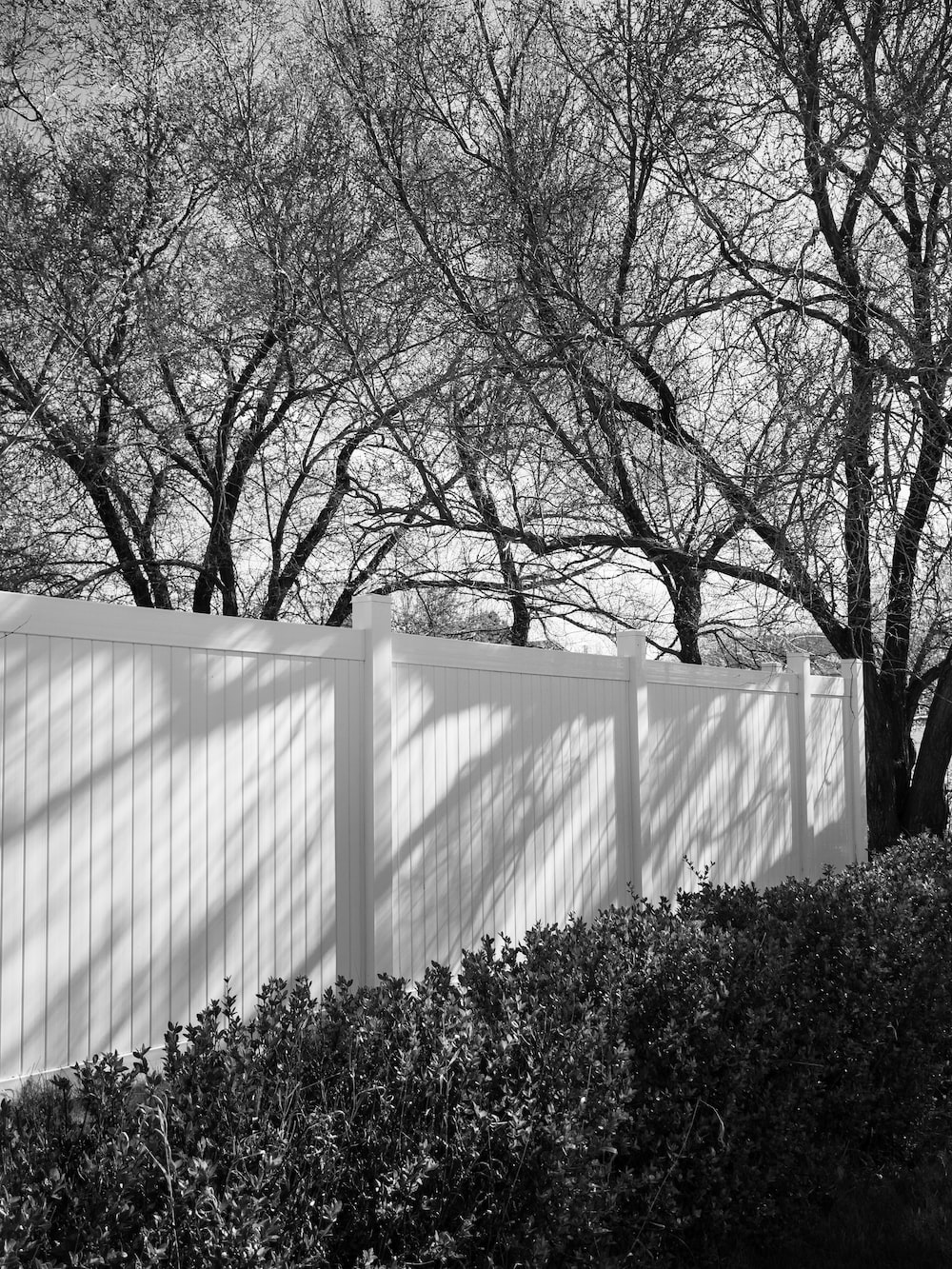 grayscale photo of trees near white wall