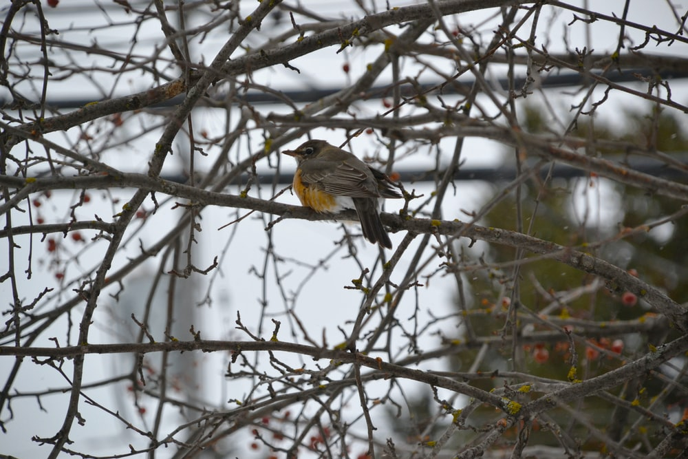 yellow and black bird on bare tree