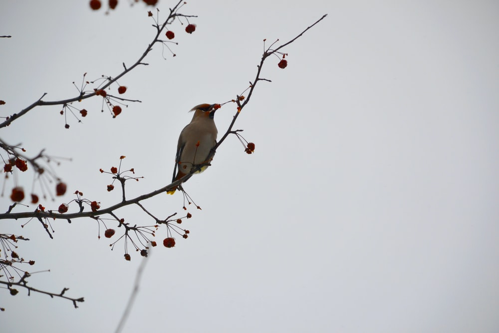 brown and white bird on brown tree branch