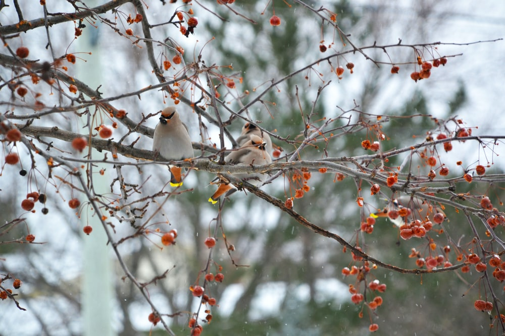 white and brown birds on tree branch